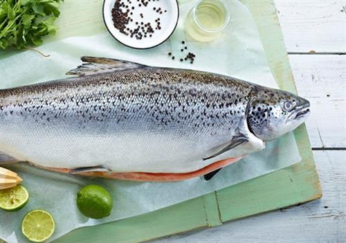 مصرف ماهی سالمون با گوجه و آبلیمو برای سلامتی مفید است